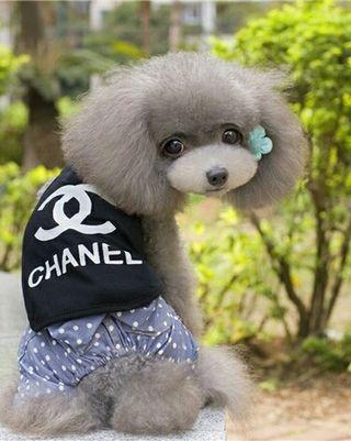 犬服 ブラック