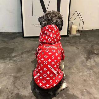 可愛 犬の服 新登場
