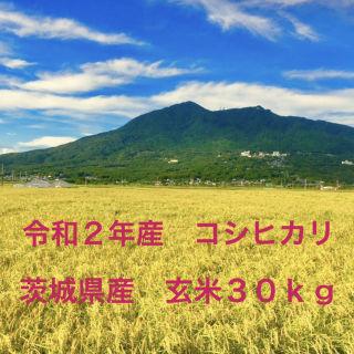 新米 茨城県産 令和2年 コシヒカリ 30kg   玄米