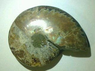 アンモナイト・オパール化 化石宝石 270