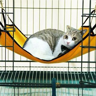 新品猫ちゃん用 ハンモック