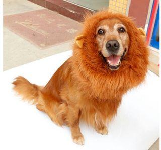 犬用ライオンマフラー新品