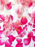 イルマIRMAフリルオーガンジー花柄pinkハイ&ロードレス