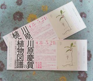川原慶賀の植物図譜 招待券 埼玉県立近代美術館