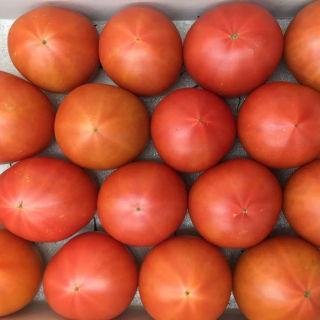 フルーツトマトぐんま産糖度11度以上ブリックスナイン
