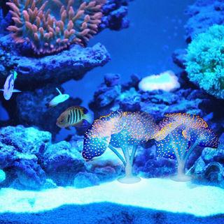 大人気 珊瑚 海藻 植物 アクアリウム デコレーション