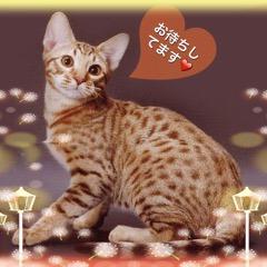 Daichi001