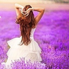 lavender(ラベンダー)
