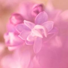 pink□